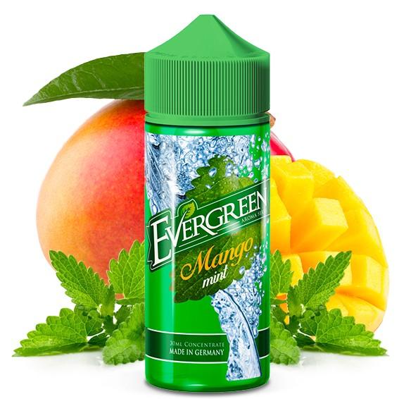 Minty Classic MANGO MINT - EVERGREEN